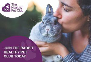 Healthy pet Club rabbits advert