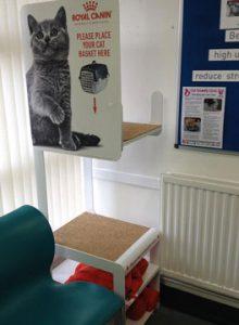 Cat waiting area at Albavet